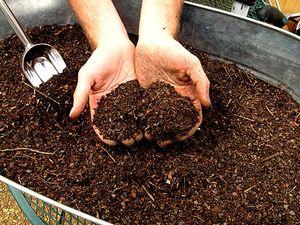 Органическое удобрение для картофеля