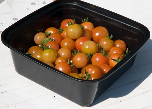 d0037-16-tomat
